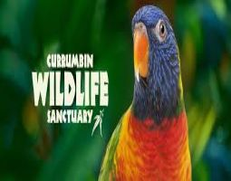 Year 1 Excursion to Currumbin Wildlife Sanctuary